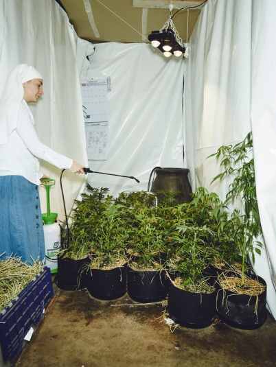 TW_nuns-grow-marjuana15_670