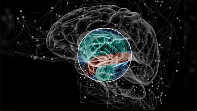risk-factors-for-schizophrenia-lie-in-brain-network-organization-311628